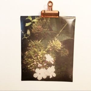 Floral Photography Wall Art